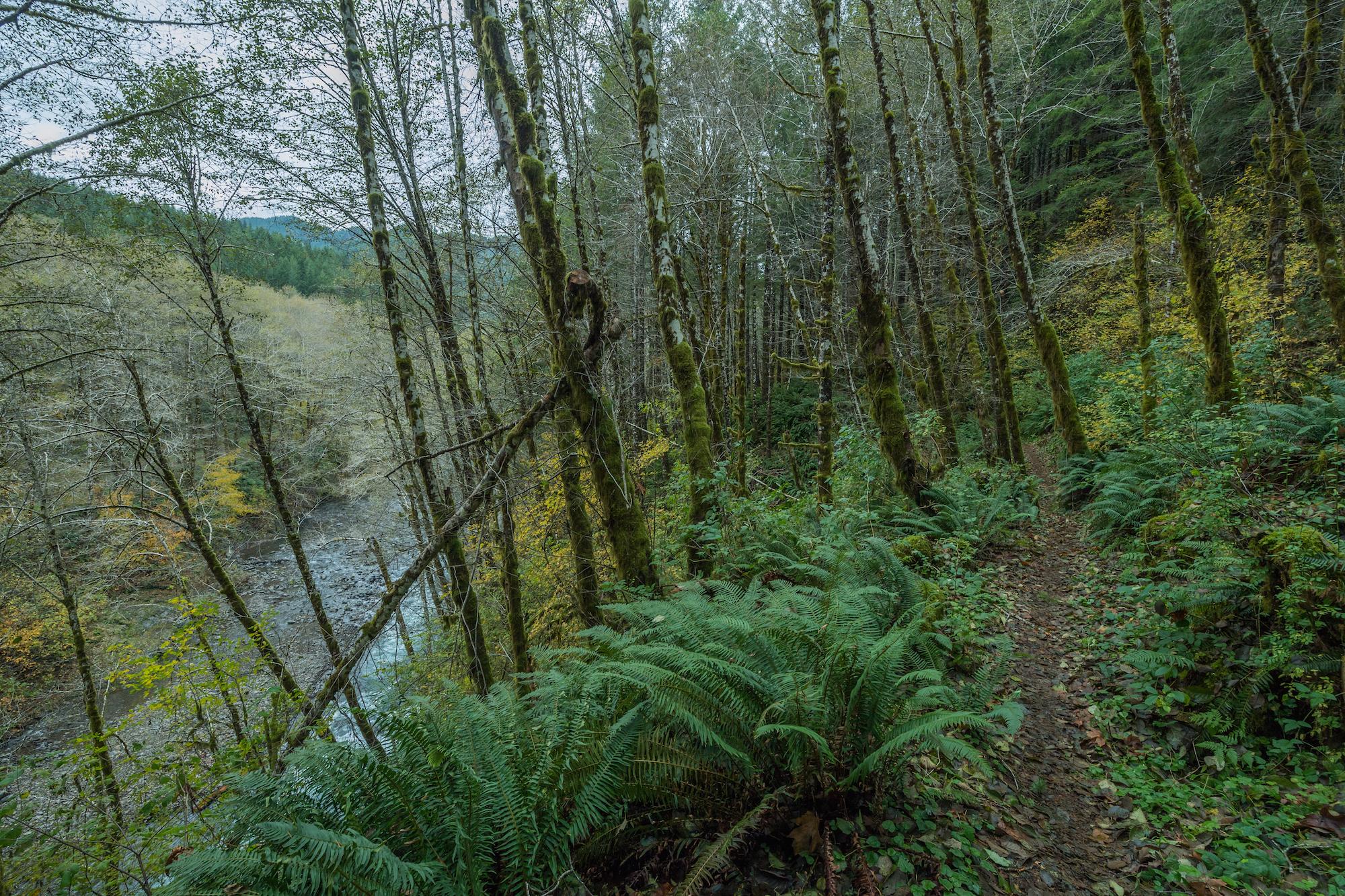 ek-trail-above-river