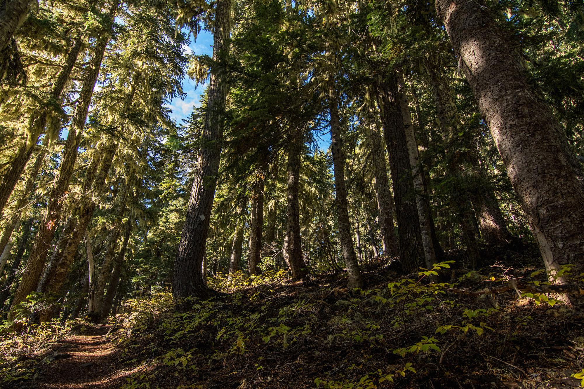 ml-mossy-treed-trail