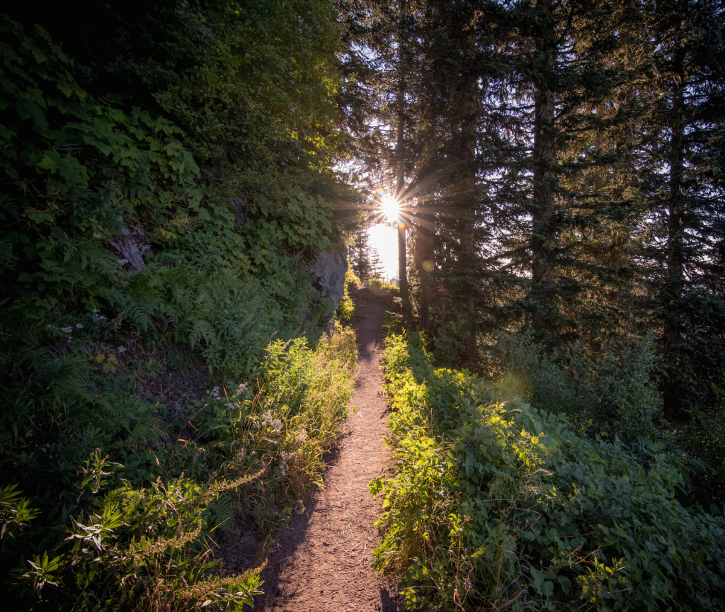 V50 wooded trail